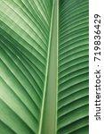 deep in narrow of banana leaf ... | Shutterstock . vector #719836429