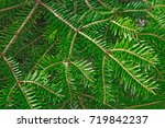 christmas tree branches... | Shutterstock . vector #719842237