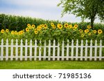 Sunflowers Growing Behind A...