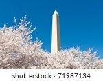 cherry blossoms washington...   Shutterstock . vector #71987134