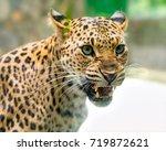 Portrait Of Leopard Prints...