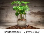 young tree  seedling coffea... | Shutterstock . vector #719913169