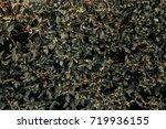 old leaves. autumn wallpaper.... | Shutterstock . vector #719936155