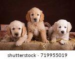 Stock photo golden retriever puppies in autumn granary barn with harvest pumpkin hay bricks flowers and 719955019