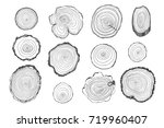 tree rings graphic... | Shutterstock . vector #719960407