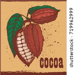 cocoa beans vintage background  ...