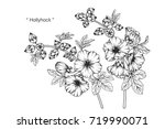 hand drawn and sketch hollyhock ... | Shutterstock .eps vector #719990071