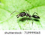 ants are eating yolks ants are...   Shutterstock . vector #719999065