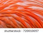 Orange American Flamingo...