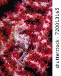 Small photo of Lembeh Strait ,Underwater critter zoo, Indonesia