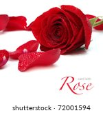 Stock photo rose and petals 72001594