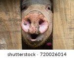 piggy nose | Shutterstock . vector #720026014