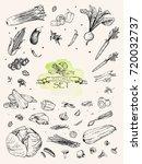 vector illustration. sketch... | Shutterstock .eps vector #720032737
