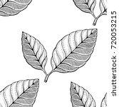 coffee leaf pattern   Shutterstock .eps vector #720053215