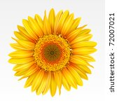 Yellow sunflower on the  white background. Mesh. - stock vector