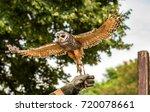 An Tawny Owl At A Bird Of Prey...