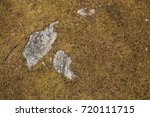 yellow brown moss with rock... | Shutterstock . vector #720111715