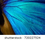 Stock photo wings of a butterfly morpho texture background morpho butterfly 720227524