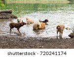 picture of different dogs who... | Shutterstock . vector #720241174