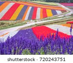 panoramic colorful flower field ... | Shutterstock . vector #720243751