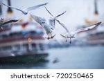 Seagulls  Bosphorus  Istanbul ...
