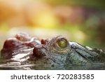 Eye Of Gharial Crocodile Above...