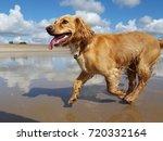 Stock photo happy dog running on beach 720332164