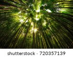 bamboo forest in damyang  south ... | Shutterstock . vector #720357139