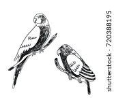 vector set with parrots. | Shutterstock .eps vector #720388195