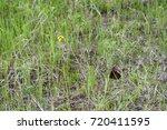 summer texture one yellow field ... | Shutterstock . vector #720411595