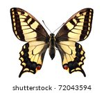 Swallowtail  Papilio Machaon ...