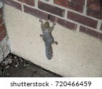 Squirrel Holding On To Wall Of...