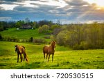 Stock photo beautiful chestnut horses on a farm in central kentucky at sunset 720530515
