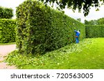 Man Is Cutting Hedge In The...