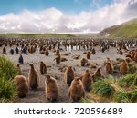 large colony of king penguins... | Shutterstock . vector #720596689