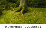 the roots of the tree in the... | Shutterstock . vector #720605581