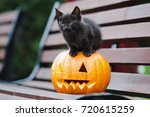 Stock photo small black kitten posing with a carved pumpkin 720615259
