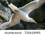 art of flight  mastery of... | Shutterstock . vector #720618985