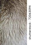 Polar Fox Fur Texture