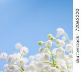 Flower Lily Of The Valley On A...