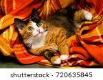 Stock photo little kitten studio light 720635845