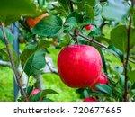 fresh red apple on tree  | Shutterstock . vector #720677665