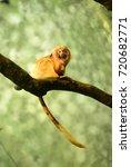 Spider Monkey Frankfurt Zoo ...