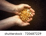 gold nuggets the hands of the... | Shutterstock . vector #720687229