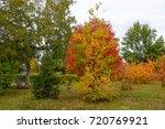 golden autumn in the park of...   Shutterstock . vector #720769921