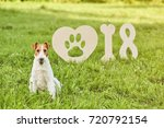 shot of a wire fox terrier... | Shutterstock . vector #720792154