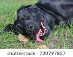 face of black dog in the park... | Shutterstock . vector #720797827