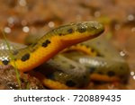 snake in the water | Shutterstock . vector #720889435