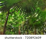 scenery of public natural... | Shutterstock . vector #720892609