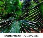scenery of public natural... | Shutterstock . vector #720892681